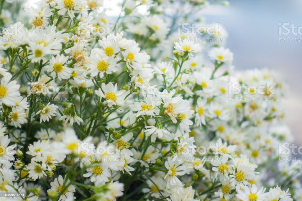 Real White Flowers With Branches Leaves For Wedding Decorative Background Macro Of White Petals Texture Soft Dreamy Image Stock Photo Download Image Now Istock