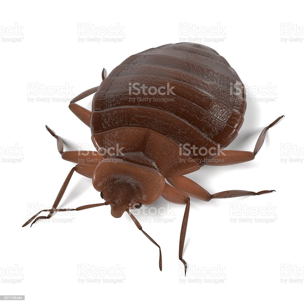 realistic 3d render of bedbug stock photo