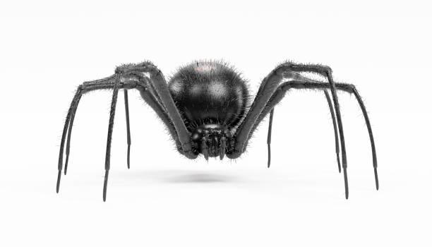 Realistic 3d render of black widow spider picture id951044912?b=1&k=6&m=951044912&s=612x612&w=0&h=f4ltyh6ctyfcigc27s 7sn8lodxr8ph2hduizvmy9do=