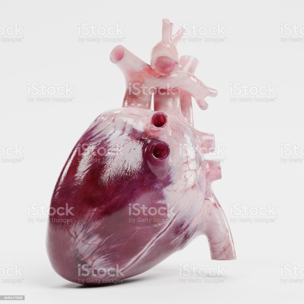 Realistic Heart Drawings Human In Pencil 17 Best Wiring Diagram House Symbols