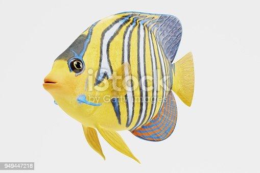 istock Realistic 3D Render of Royal Angelfish 949447218