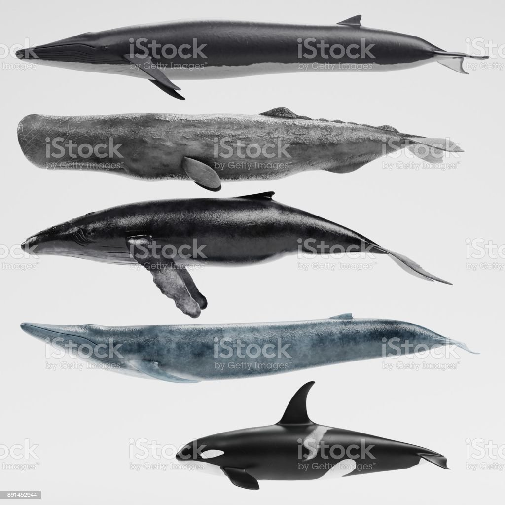 Realistic 3D Render of Whales Collection стоковое фото