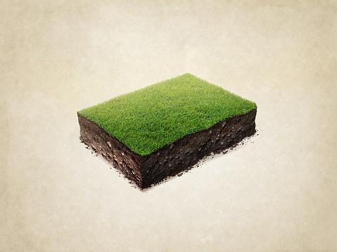 cross section, slice, soil, green, grass