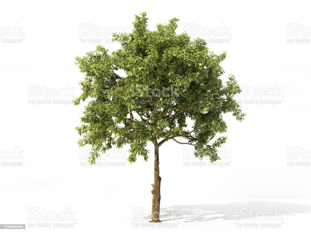 Realistic apple tree full of leaves isolated on a white. 3d illustration stock photo