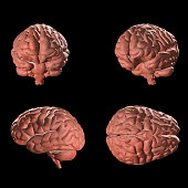 Realistic human brain isolated on black background. 3d rendering