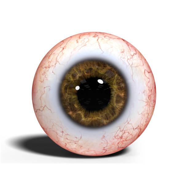realistische menschliche Auge mit braunen Iris isoliert auf weißem Hintergrund (3d Illustration) – Foto