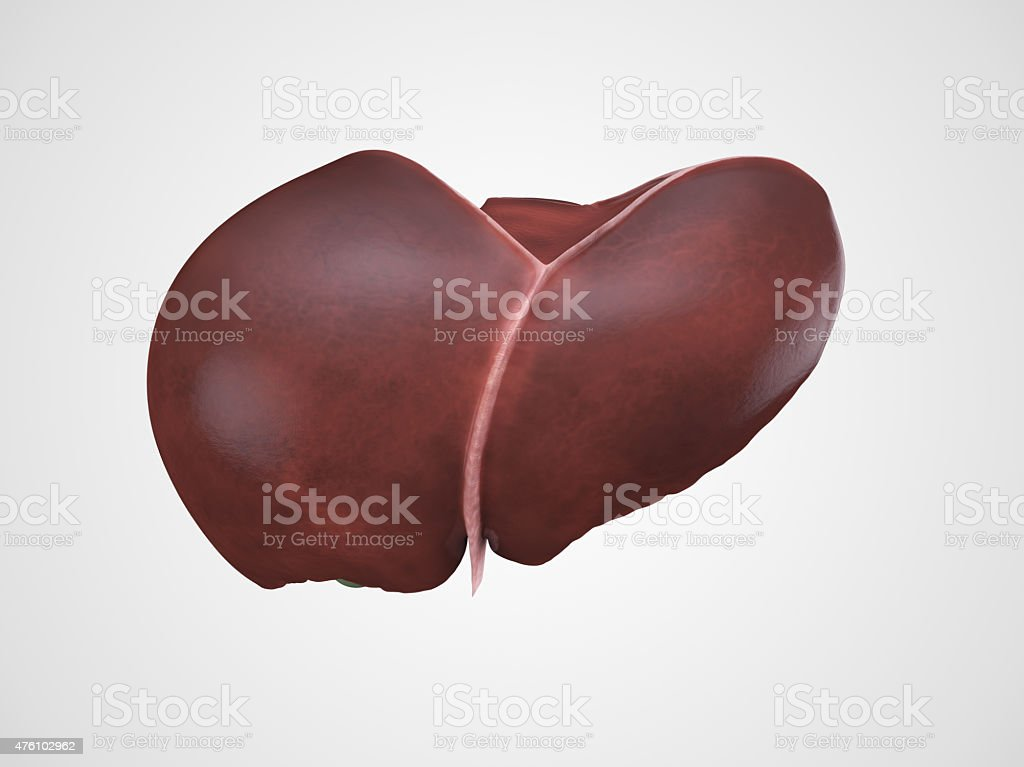 Realistic human liver illustration stock photo