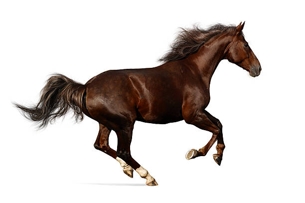 realistic illustration of budenny horse galloping - horse stock pictures, royalty-free photos & images