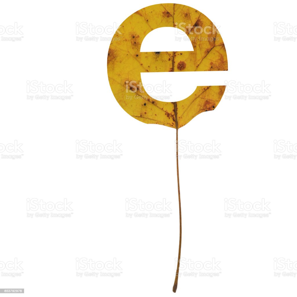 Realistic yellow autumn leaf alphabet lowercase letter e with embedded selection clipping path isolated on white compositing stock photo