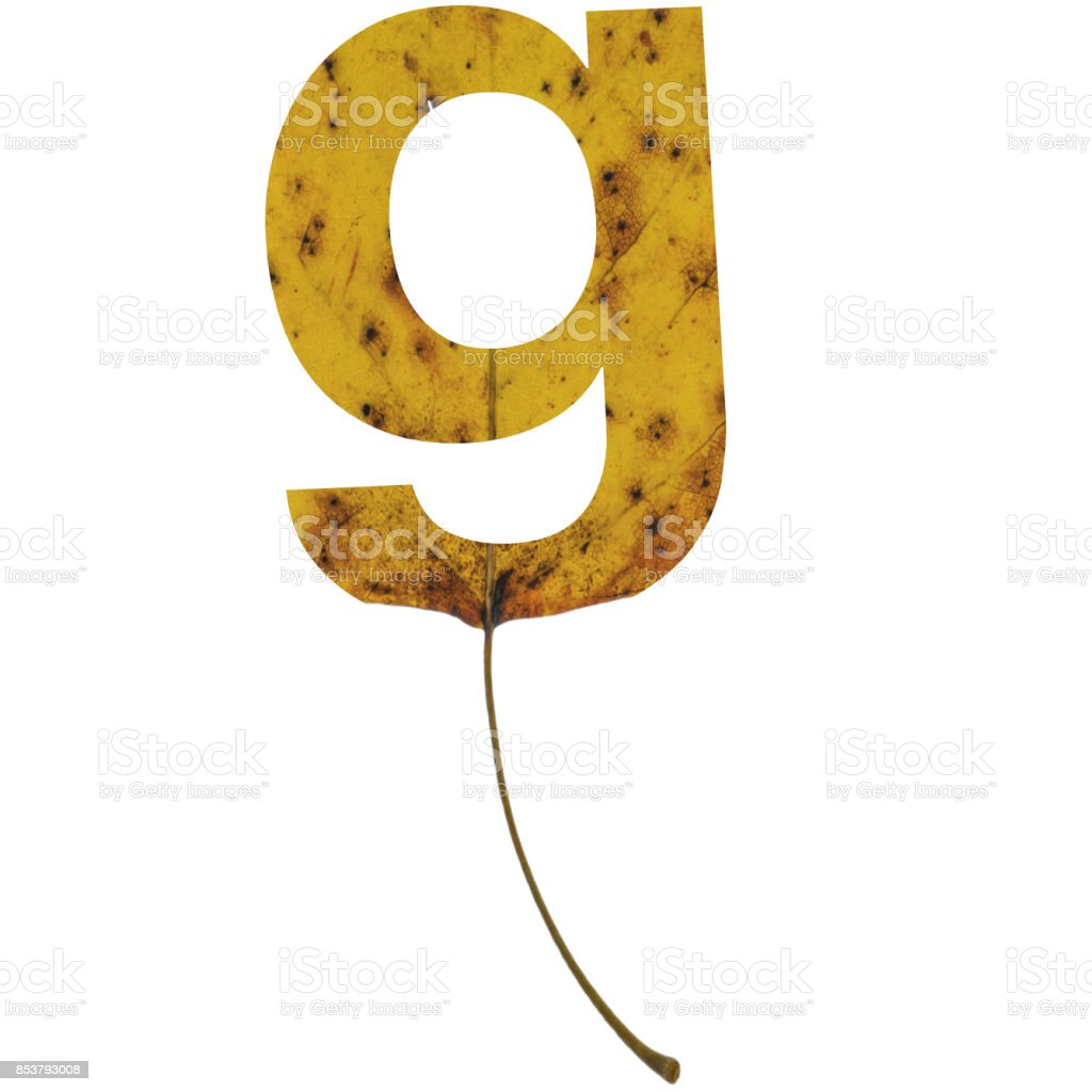 Realistic yellow autumn leaf alphabet lowercase letter g with embedded selection clipping path isolated on white compositing stock photo