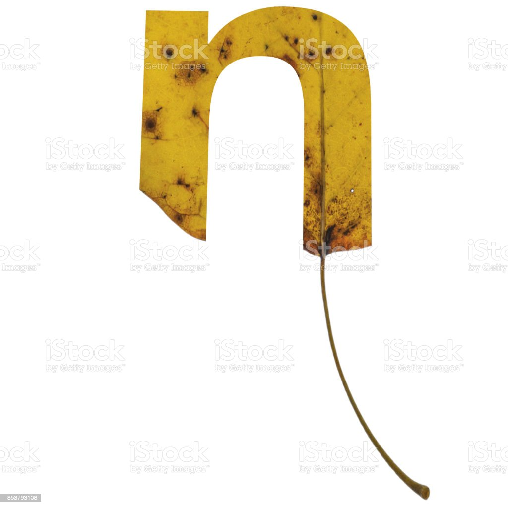 Realistic yellow autumn leaf alphabet lowercase letter n with embedded selection clipping path isolated on white compositing stock photo