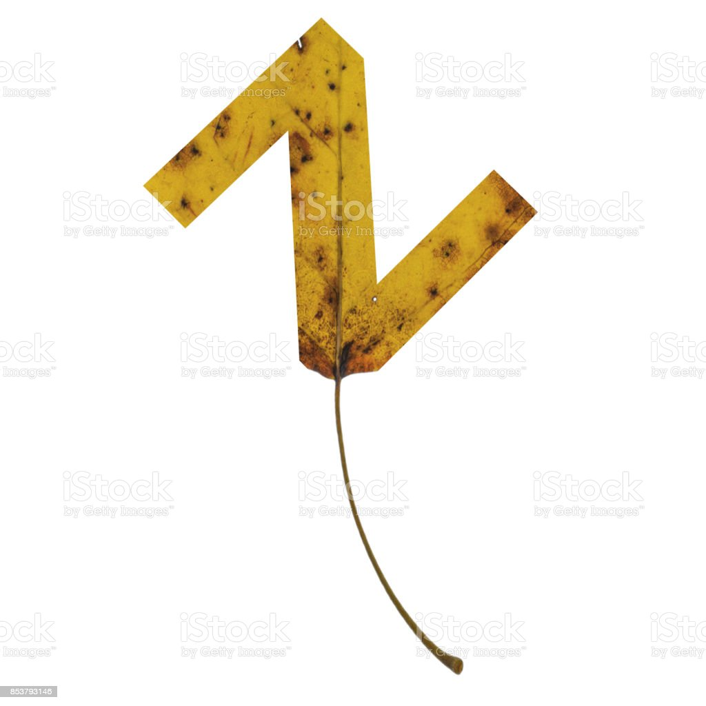 Realistic yellow autumn leaf alphabet lowercase letter z with embedded selection clipping path isolated on white compositing stock photo