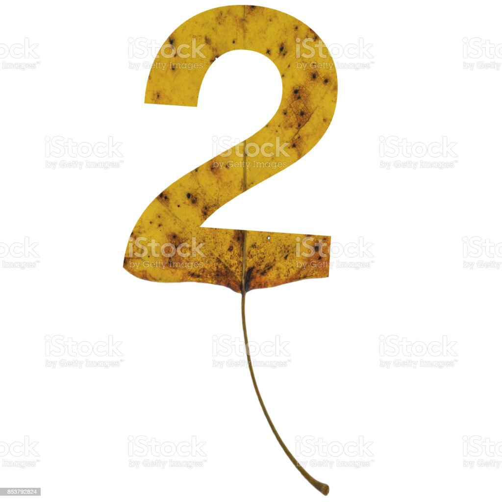 Realistic yellow autumn leaf alphabet number 2 with embedded selection clipping path isolated on white compositing stock photo
