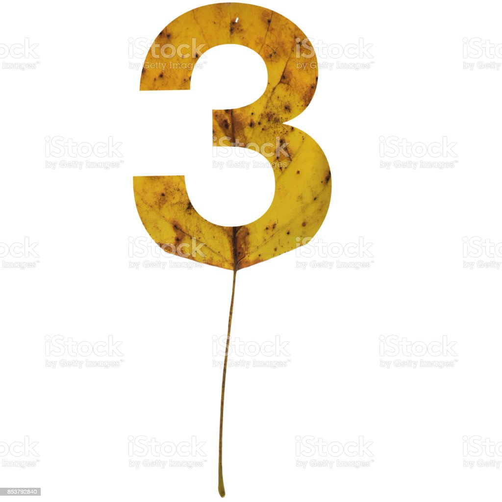 Realistic yellow autumn leaf alphabet number 3 with embedded selection clipping path isolated on white compositing stock photo