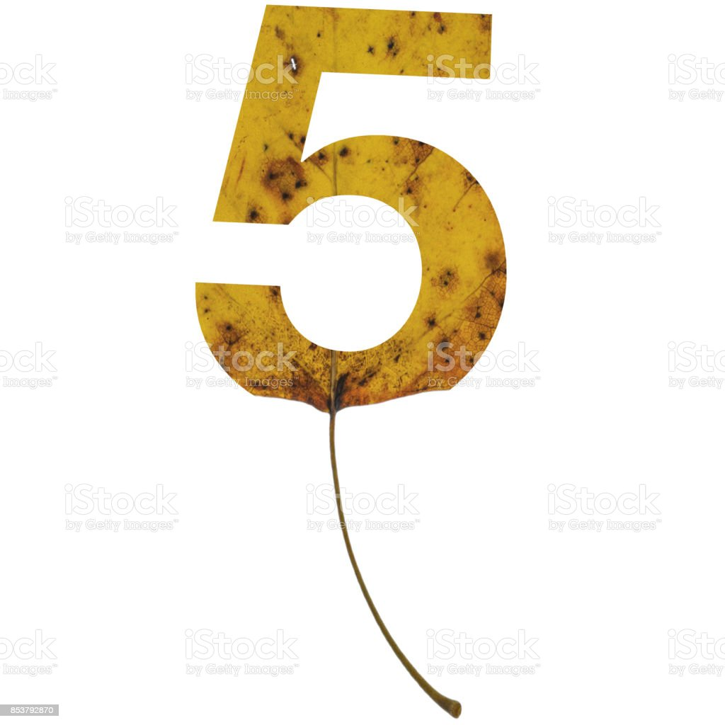 Realistic yellow autumn leaf alphabet number 5 with embedded selection clipping path isolated on white compositing stock photo