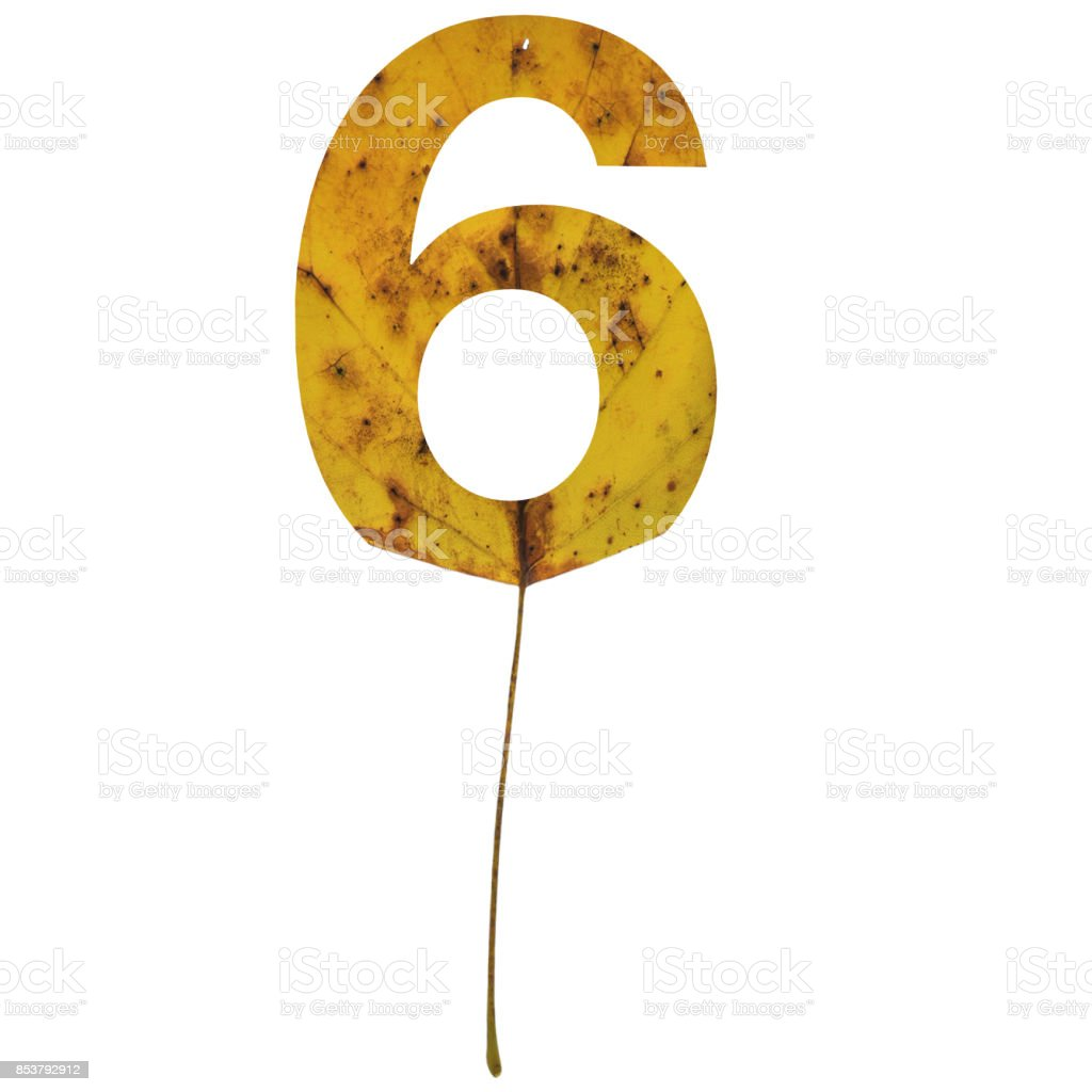 Realistic yellow autumn leaf alphabet number 6 with embedded selection clipping path isolated on white compositing stock photo