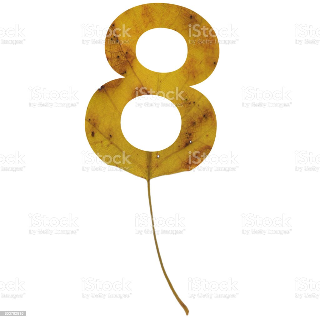 Realistic yellow autumn leaf alphabet number 8 with embedded selection clipping path isolated on white compositing stock photo