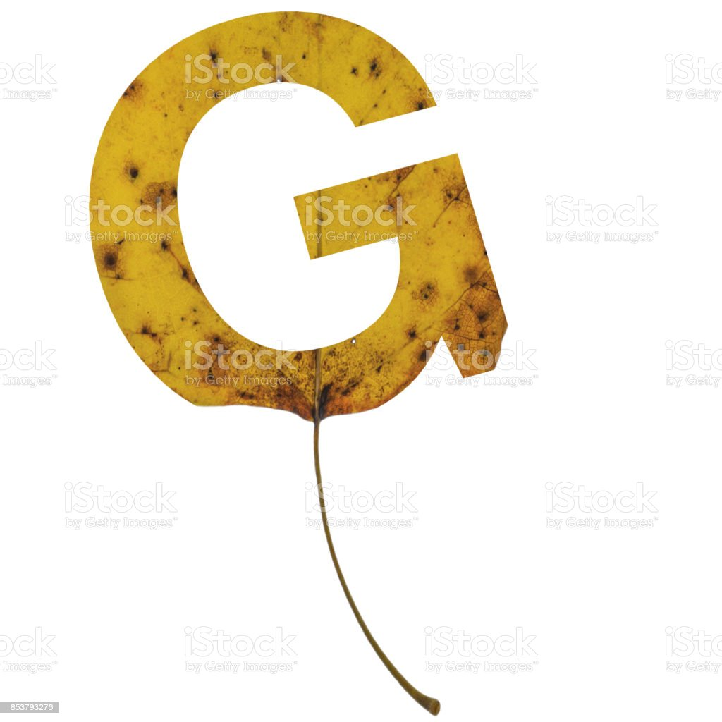 Realistic yellow autumn leaf alphabet uppercase letter g with embedded selection clipping path isolated on white compositing stock photo