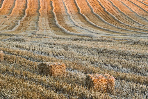 reaped wheat fields in Antequera, Malaga. Andalusia, Spain