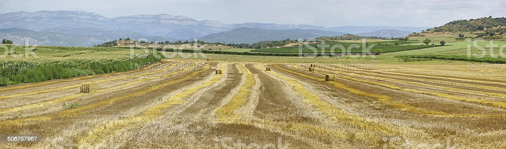 Reaped wheat fields in La Noguera stock photo