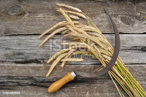 still life of the harvest of rye on the old table