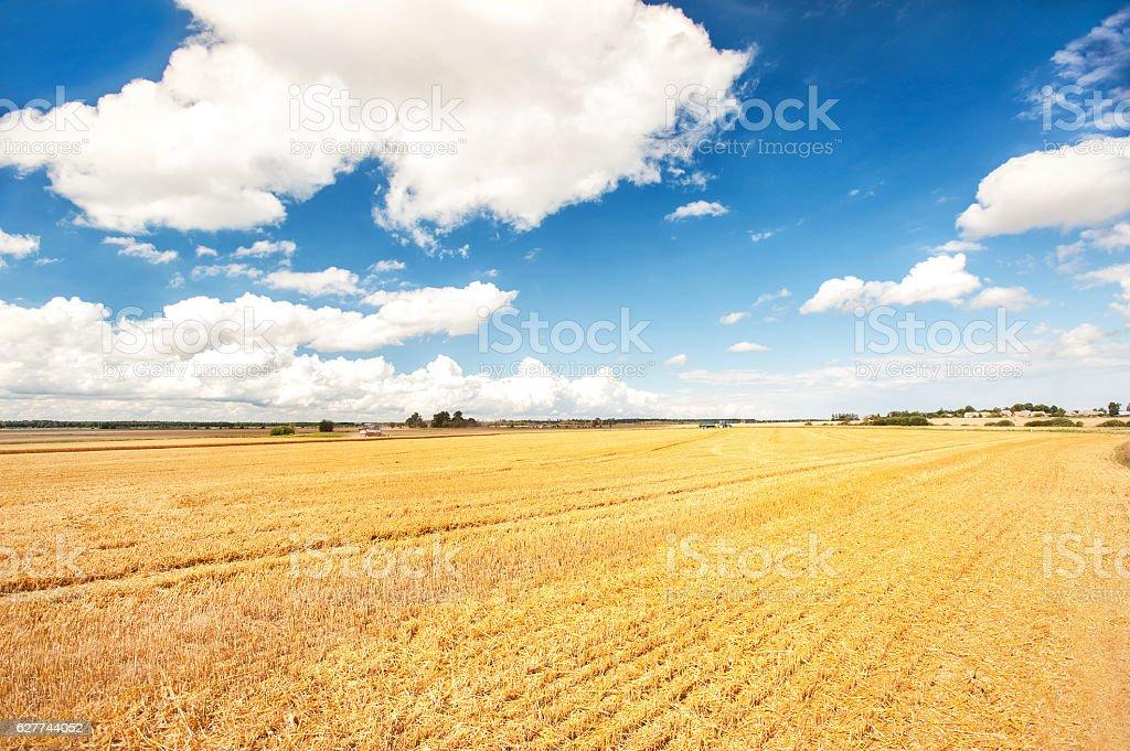 Reaping season. Golden wheat field on cloudskape background. stock photo