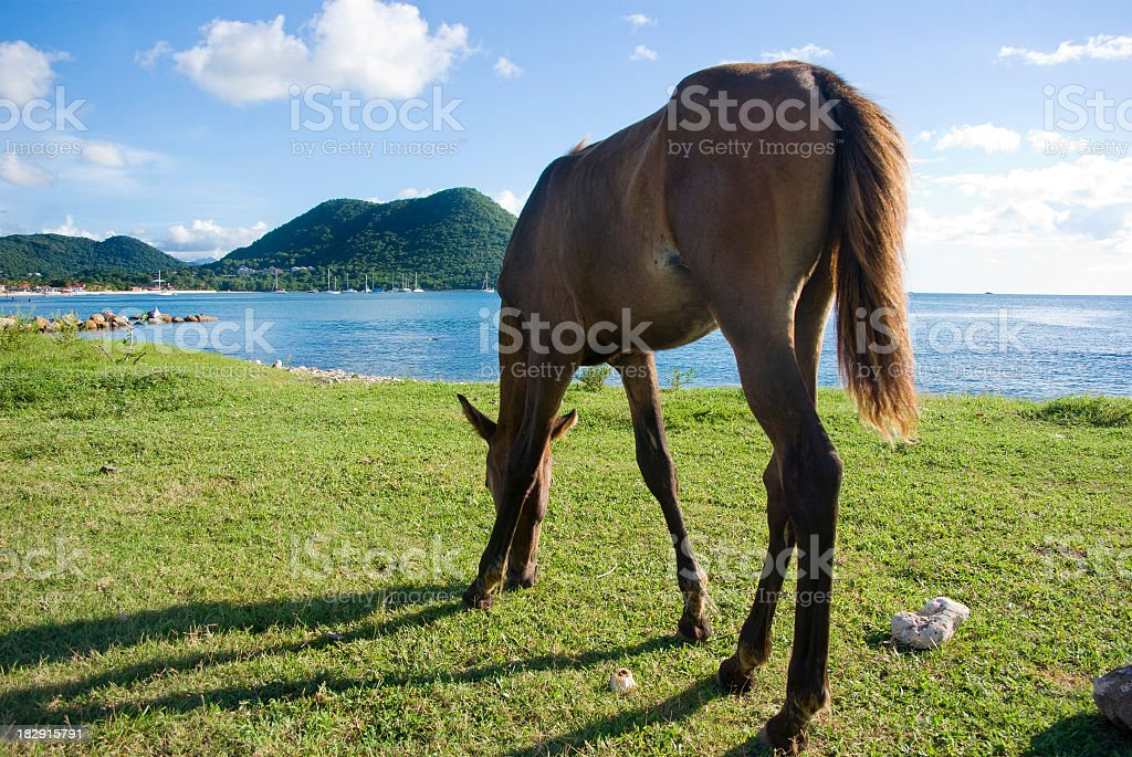 rear end - grazing horse outdoors stock photo