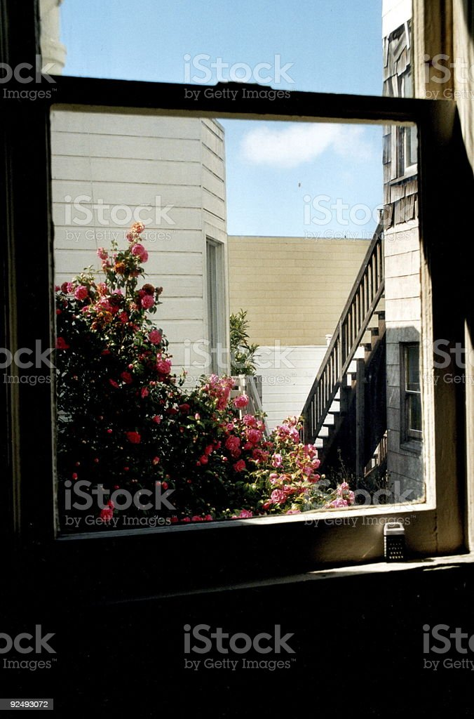 Rear Kitchen Window royalty-free stock photo