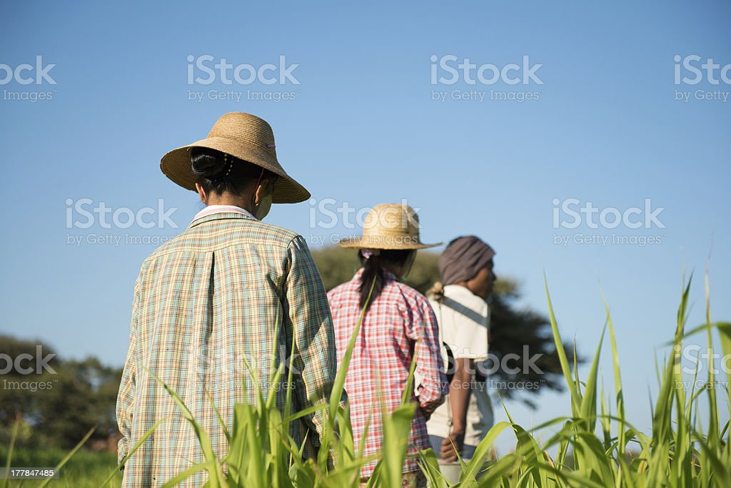 Rear view Group of Traditional Asian farmers royalty-free stock photo