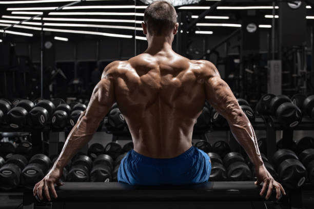 Rear view muscular man showing back muscles at the gym. Strong male naked torso, workout stock photo