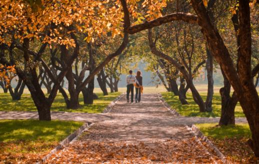Rear View Of A Couple Walking Down A Park Path In Autumn Stockfoto en meer beelden van Afbeelding