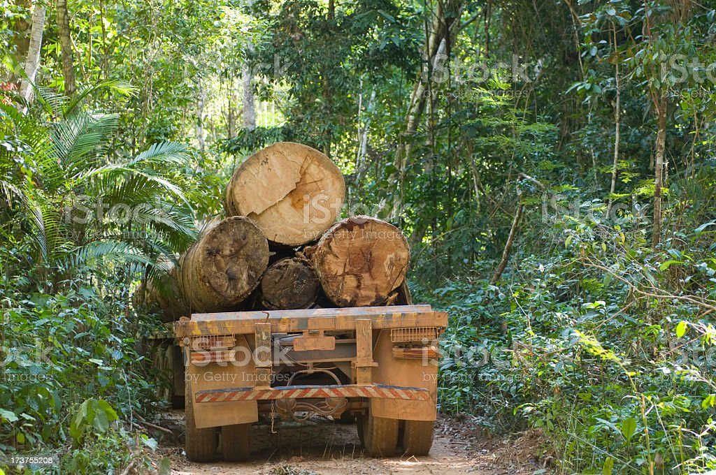 Rear view of a loaded logging truck in the Amazon rainforest royalty-free stock photo