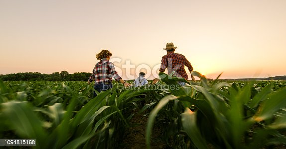 1094815168 istock photo Rear view of family on corn field 1094815168