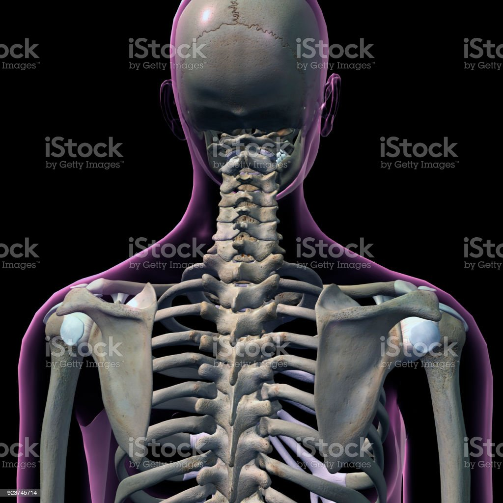 Rear view of female neck and shoulder bones stock photo more rear view of female neck and shoulder bones royalty free stock photo ccuart Image collections