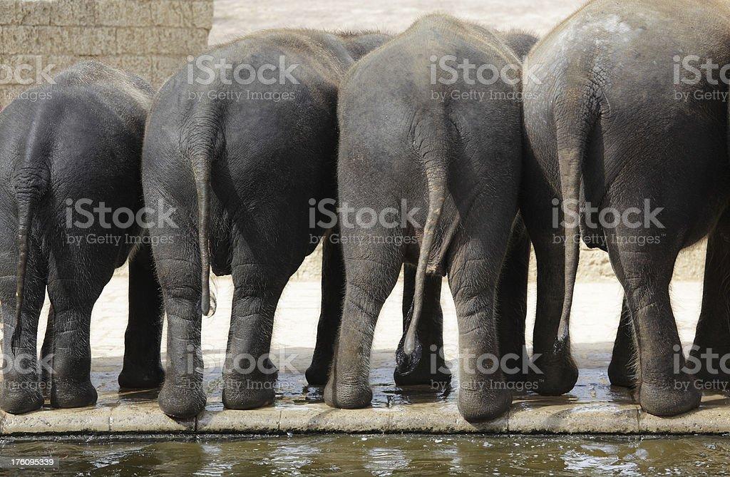 Rear view of four elephants (XXL) royalty-free stock photo