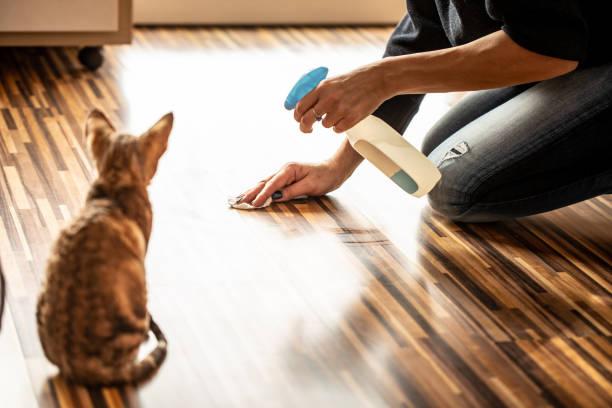 Rückansicht von Kitten Watching Owner Cleaning Floor - Stockfoto – Foto