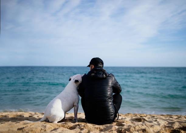 Sahilde oturan insan ve köpeğin arka görünümü stok fotoğrafı