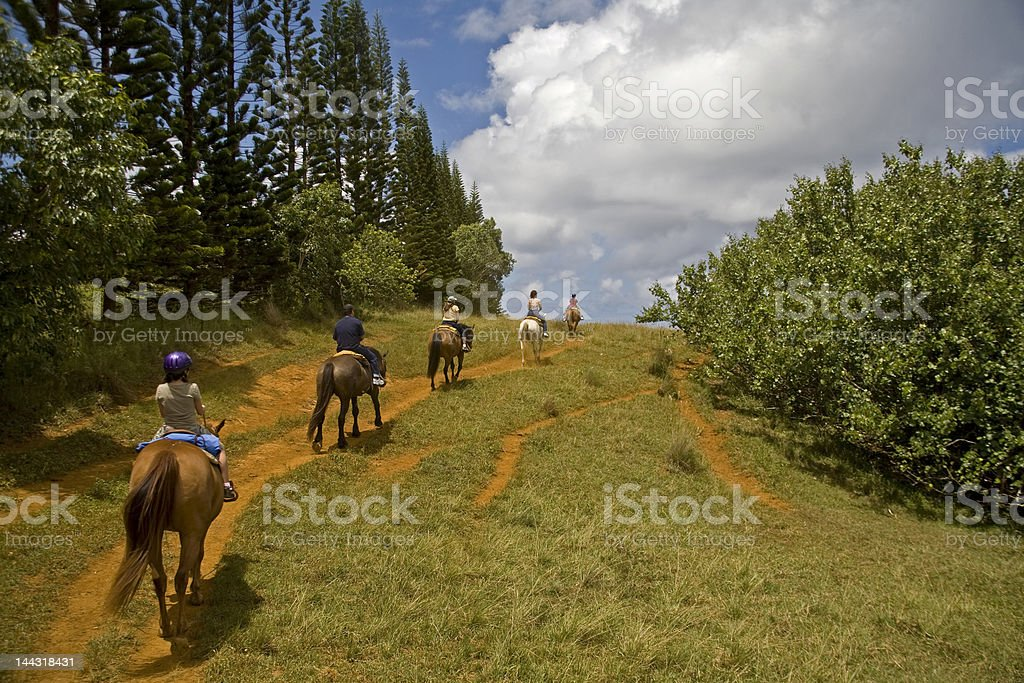 Rear view of people horseback riding on trails in a forest stock photo