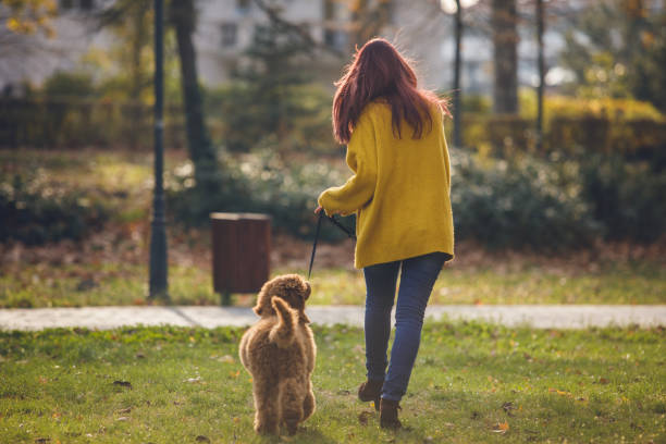 Rear view of pet owner walking with dog stock photo