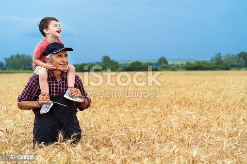Rear view of senior farmer showing to his grandson a wheat field