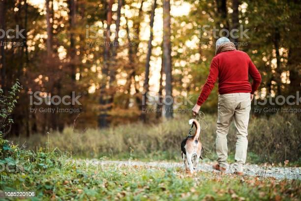 Rear view of senior man walking with a dog in an autumn nature at picture id1085220106?b=1&k=6&m=1085220106&s=612x612&h=wsso0l9aaogw8tavgsrgobpu8sptuu4grnommni mdm=