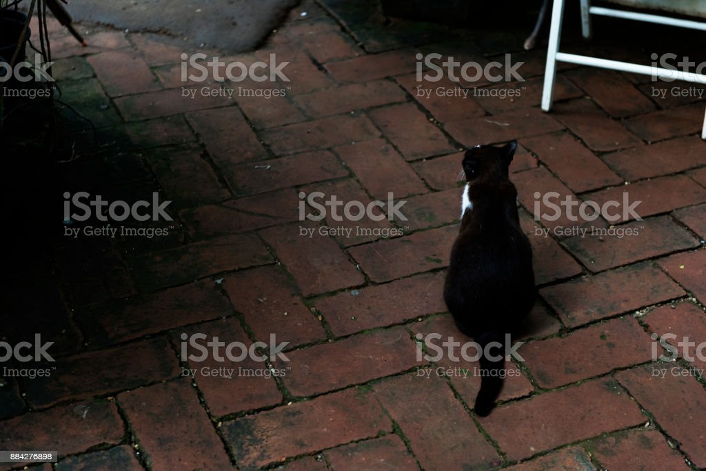 Rear view of street cat stock photo
