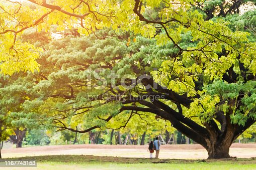 istock Rear view of young couple walking under a big tree in park; selective focus. 1167743153