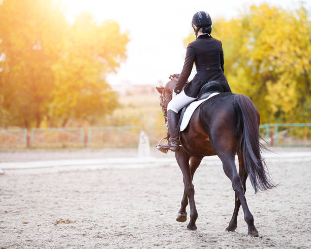 Rear view of young rider woman on bay horse stock photo
