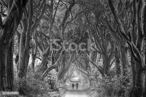 Rear view on couple holding hands walking through foggy dark hedges in Northern Ireland. Black and white picture (RGB file).