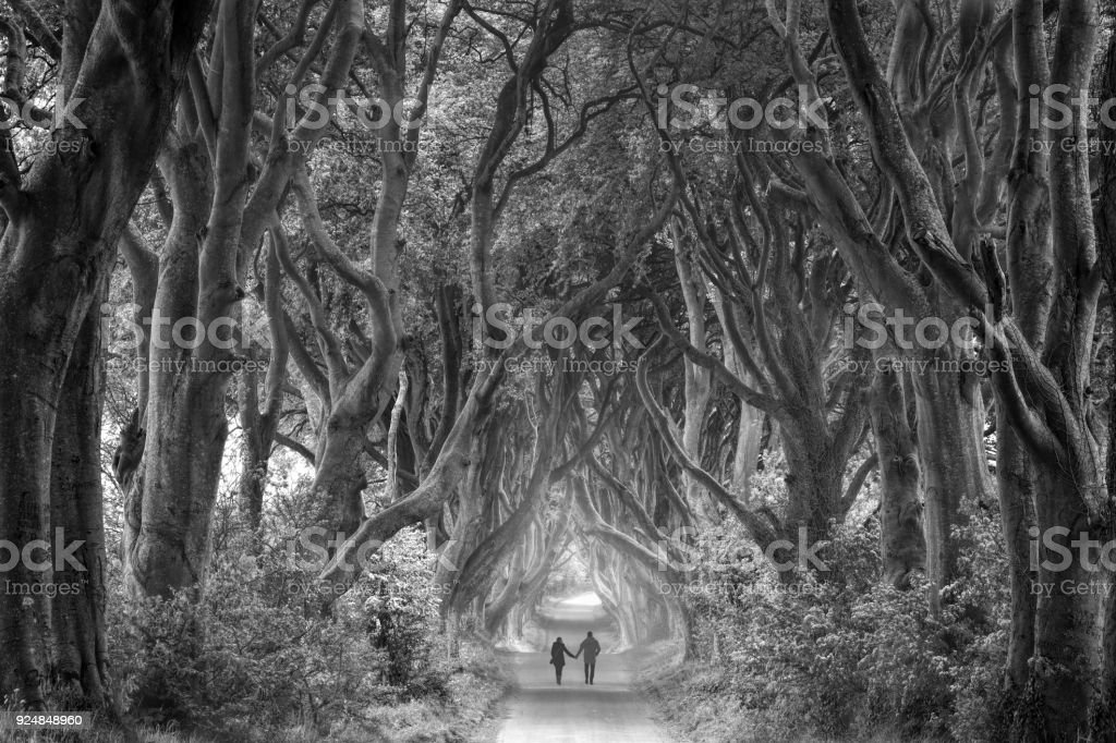 Rear view on couple holding hands walking through foggy dark hedges in Northern Ireland stock photo