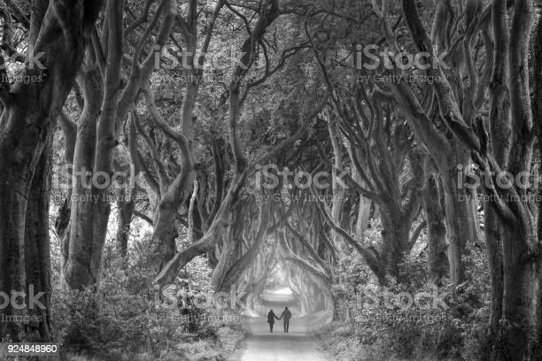 Photo of Rear view on couple holding hands walking through foggy dark hedges in Northern Ireland