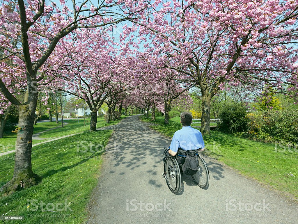 Rear view on man in wheelchair under blooming cherry trees royalty-free stock photo