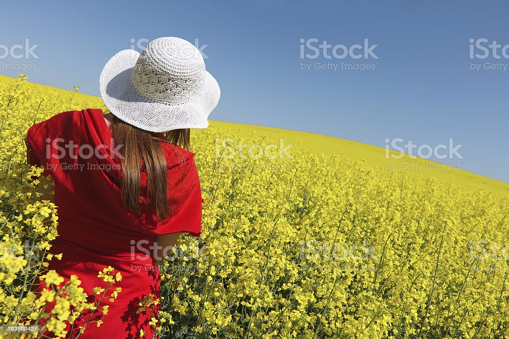 Rear view on red dressed woman in canola field (XXXL) royalty-free stock photo