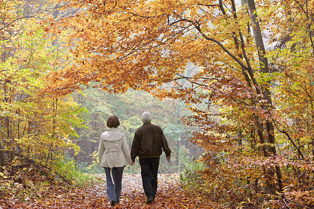 Rear view on senior couple walking in autumn forest stock photo